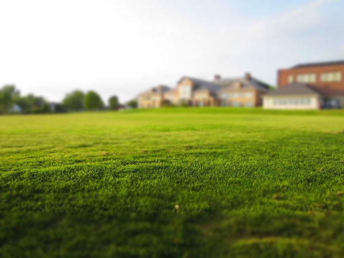 Wysiew trawnika krok po kroku