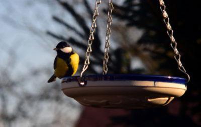 Ptak przy poidełku